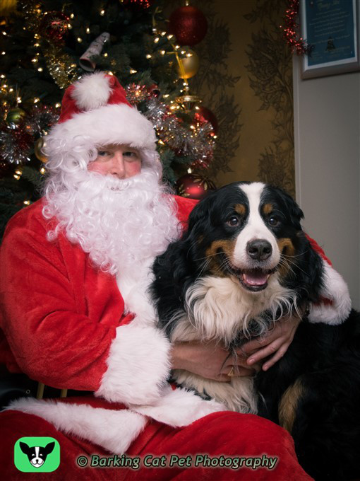 Mercat Grill Helps The Home This Christmas Edinburgh Dog
