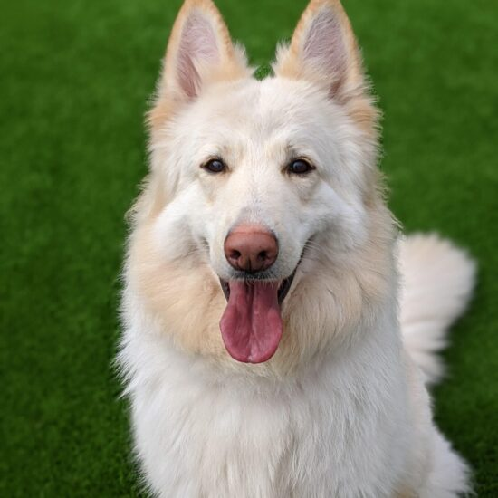 Storm *REHOMED*