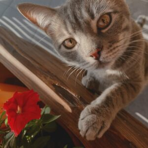 A cat next to a red flower